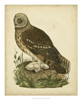 Antique Nozeman Owl I Fine Art Print