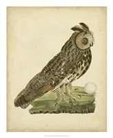 Antique Nozeman Owl III Fine Art Print