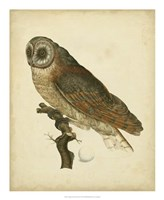 Antique Nozeman Owl IV Fine Art Print