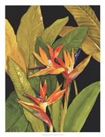Dramatic Bird of Paradise Fine Art Print