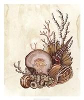 Baroque Nautilus I Framed Print