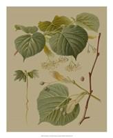 Forest Foliage I Fine Art Print