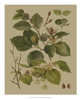 Forest Foliage III Fine Art Print