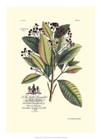 Royal Botanical VI Fine Art Print