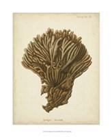 Coral Collection VI Fine Art Print