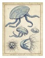 Medusa II Fine Art Print