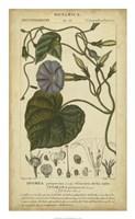 Floral Botanica I Fine Art Print