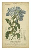 Floral Botanica II Fine Art Print