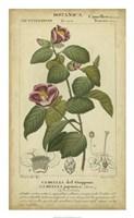 Floral Botanica III Fine Art Print