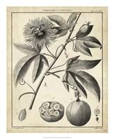 Passiflora I Fine Art Print