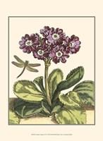 Garden Vignette IV Fine Art Print
