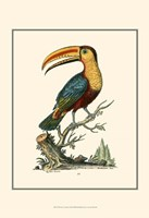 The Toco Toucan Fine Art Print