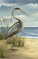 Shore Bird I Fine Art Print