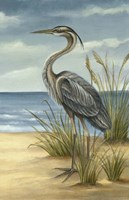 Shore Bird II Fine Art Print