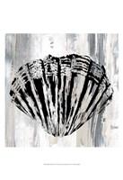 Black Shell II Fine Art Print