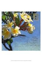 Plumeria & Postage III Fine Art Print