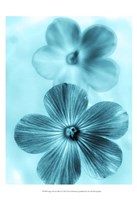 Forget Me Not Blue I Fine Art Print