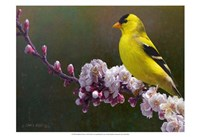 Goldfinch Flowers Fine Art Print