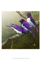 African Starlings Fine Art Print