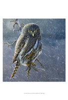 Owl in Winter II Fine Art Print