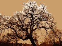 Oak Tree on Tope Fine Art Print