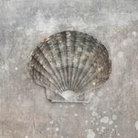 Nautilus II Wall Poster