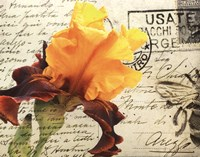 Carte Postale Iris Framed Print
