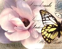 Carte Postale Magnolia II Framed Print