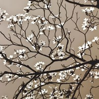 Dogwood Square I Fine Art Print