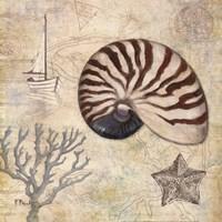 Discovery Shell I Framed Print