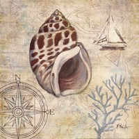 Discovery Shell IV Framed Print