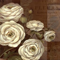 Patina Ranunculus - mini Fine Art Print