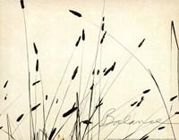 Grass Balance Framed Print