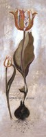 Tulipa Violoncello V Fine Art Print