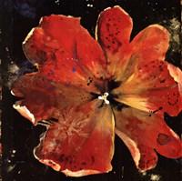 Botany Fleur V Framed Print