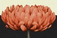 Apricot Flame II Fine Art Print