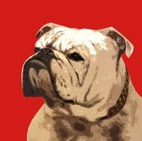 The British Bulldog, Red Fine Art Print