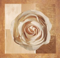 Warm Rose I Fine Art Print