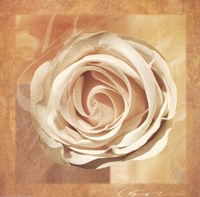 Warm Rose II Fine Art Print