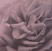 Allure III Fine Art Print