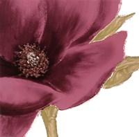 Grandiflora Blush I Fine Art Print