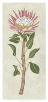 Non-Embellished Protea I Framed Print