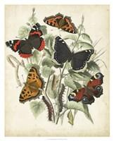 Non-Embellished Butterfly Haven I Framed Print