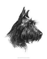 Canine Study II Fine Art Print
