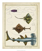 Antique Rays & Fish I Fine Art Print