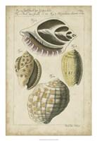 Vintage Shell Study I Fine Art Print
