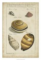 Vintage Shell Study IV Fine Art Print