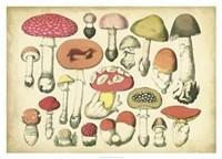 Vintage Mushroom Chart Fine Art Print