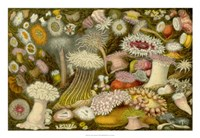 Sea Anemone Panorama Fine Art Print
