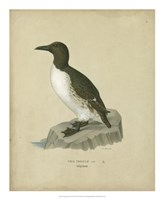Antique Penguin II Fine Art Print